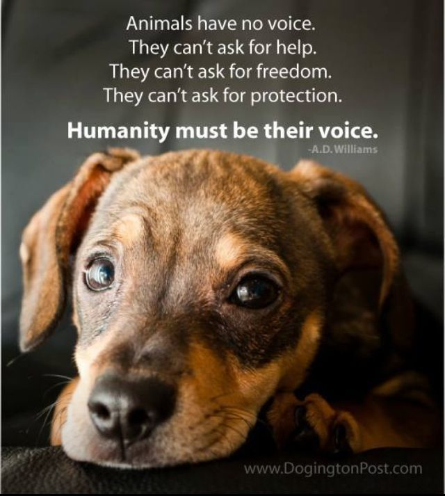 Animals Have No Voice We Have To Be Their Voice  Animal -2911