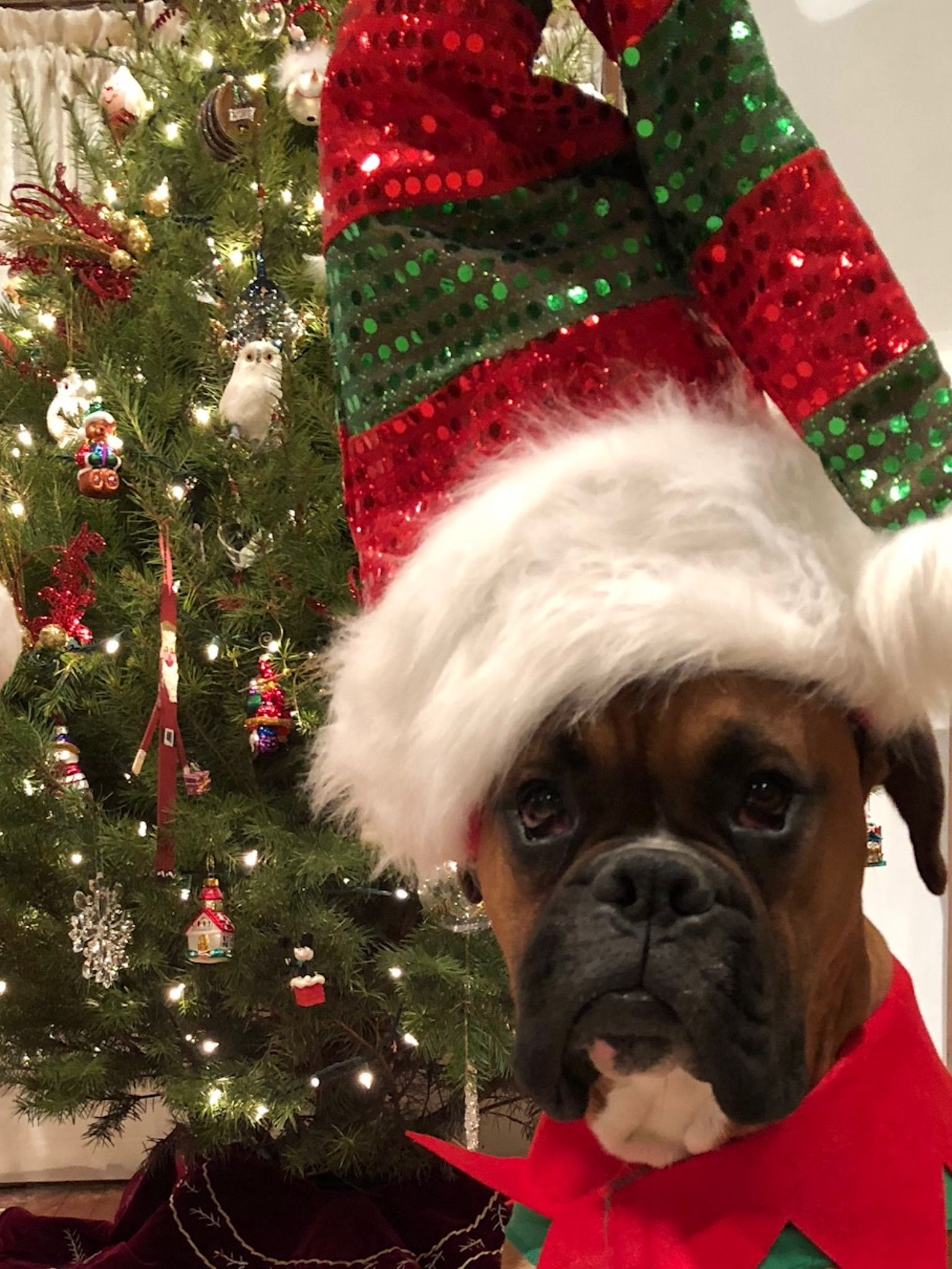 Love The Hat Awesome Boxer Boxer Dogs Funny Funny Boxer Pictures Boxer Dog Puppy