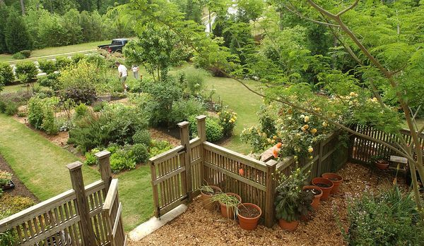 Mini Orchard In Your Yard Www Ajc More