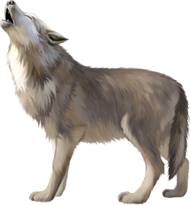 A Crying Wolf It S Howling Wolf Illustration Animals Dog Illustration