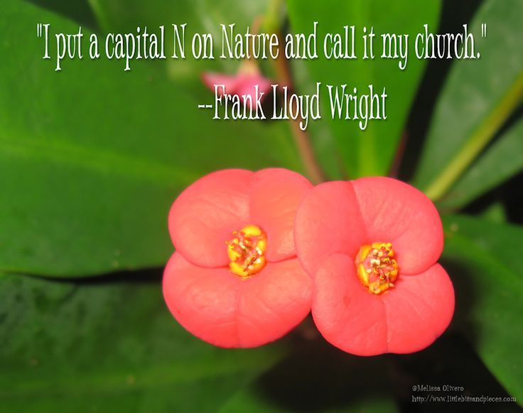 Nature Church ~ Frank Lloyd Wright Graphic Quote