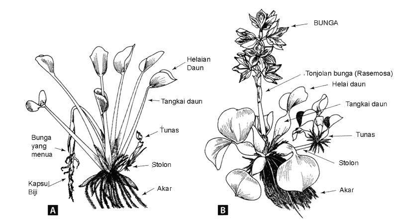 Wow 15 Gambar Yang Mudah Ditiru Buat Garis Pada Daun Yang Sudah Di Buat Sekarang Ini Photo 3d Telah Semakin Ramai Dan Telah Gambar Bunga Bunga Sketsa Bunga
