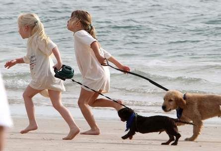 Dogs on Volusia County beaches? Both sides will chew on