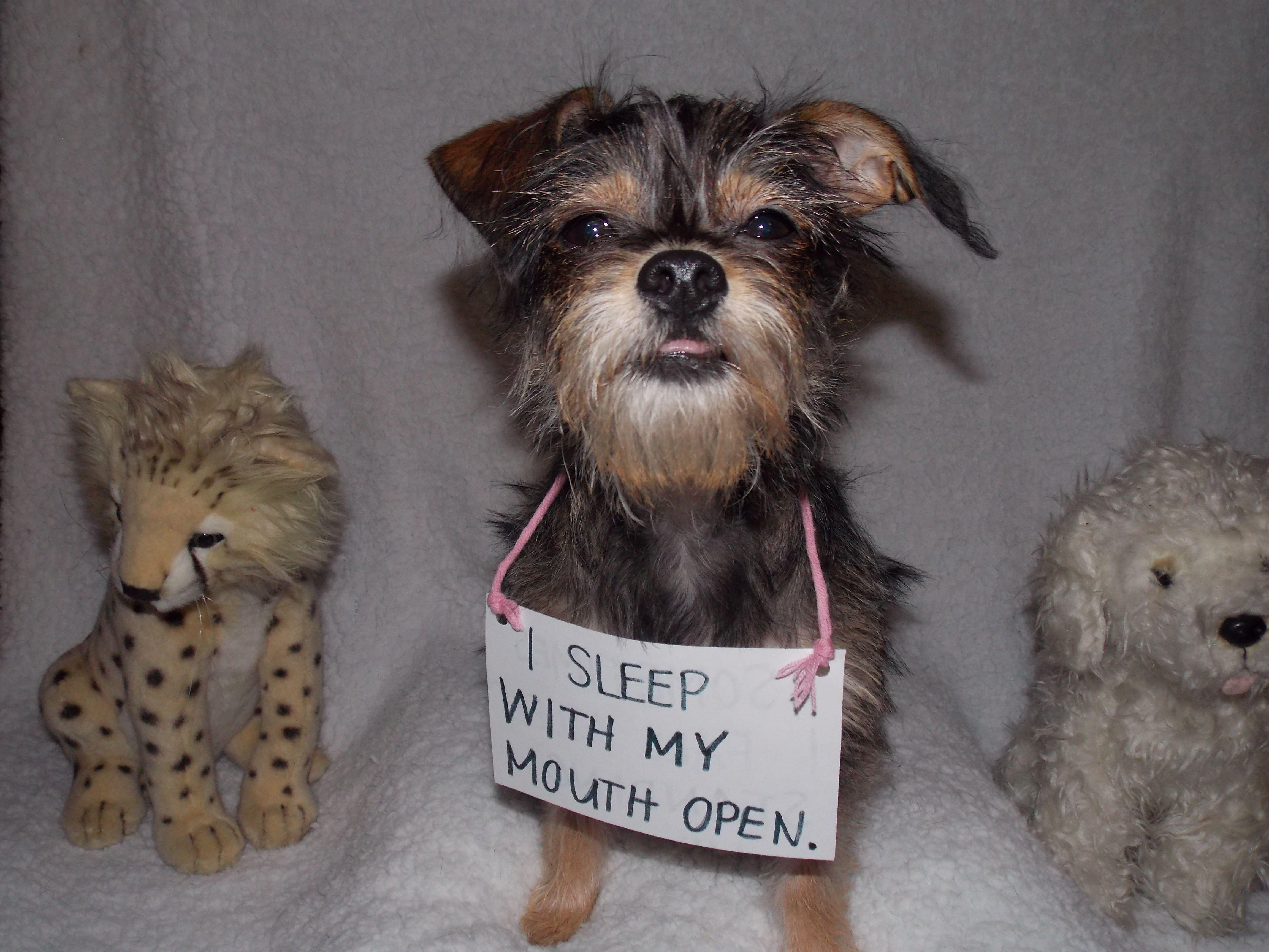 Dog shaming lol