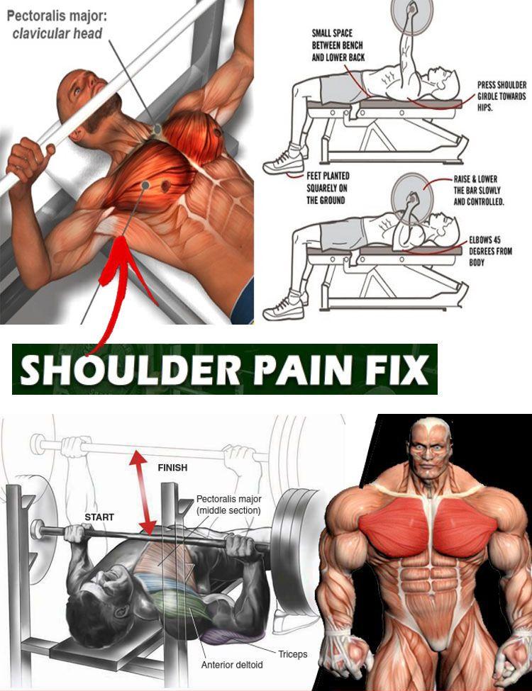 Bench Press Sport Musculation Workout Et Exercice