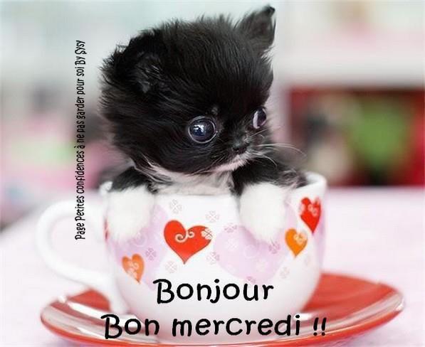 Bonjour Bon Mercredi Chien Mignon Bebes Animaux Mignons Chaton Tasse A The