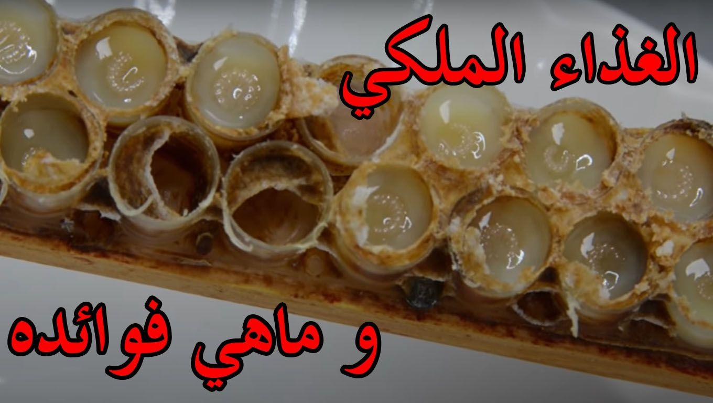 الغذاء الملكي أو غذاء ملكات النحل هو من منتجات الخلية تقوم بتحضيره عاملات النحل لتغذية الملكة في مرحلة اليرقة ويعتبر من أغلى منتج Food Royal Jelly Vegetables