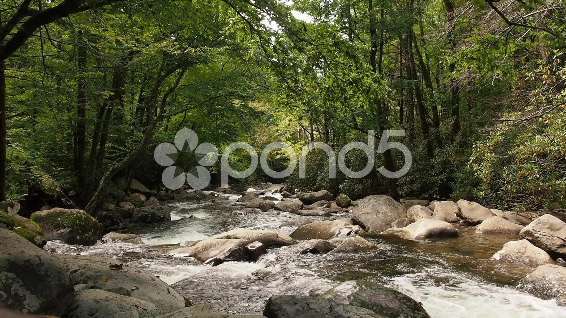 Forest Stream Stock Footage #AD ,#Stream#Forest#Stock#Footage