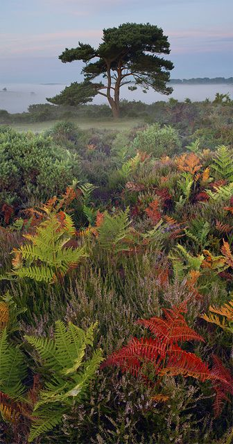 New Forest Colours Beautiful Nature Beautiful Landscapes Forest Color