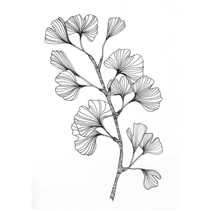 Ginko-Zweig mit Blättern als Tätowierung. Kunst in schwarz und weiß. Lineart …