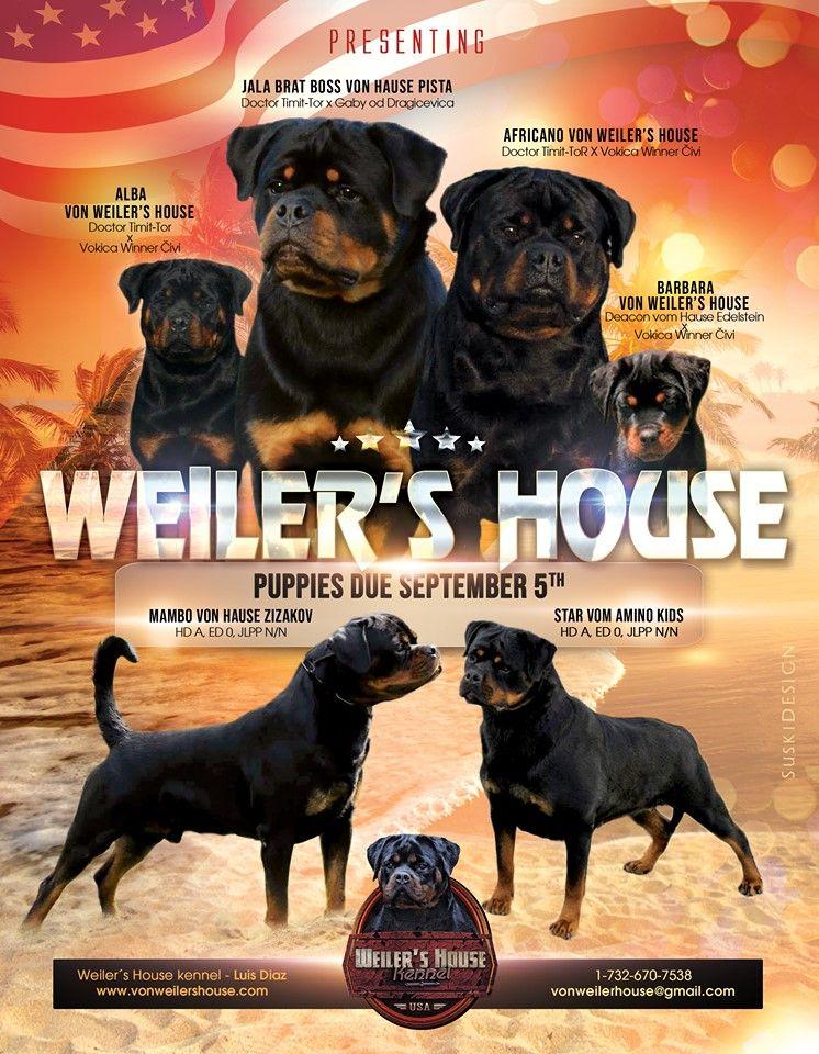Weiler S House Luis Diaz New Jersey 1 732 670 7538 Vonweilerhouse