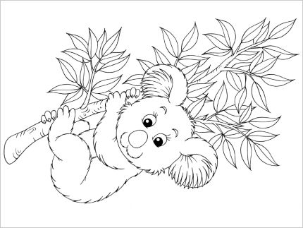 Koala Colouring In Five Pages For Australia Day