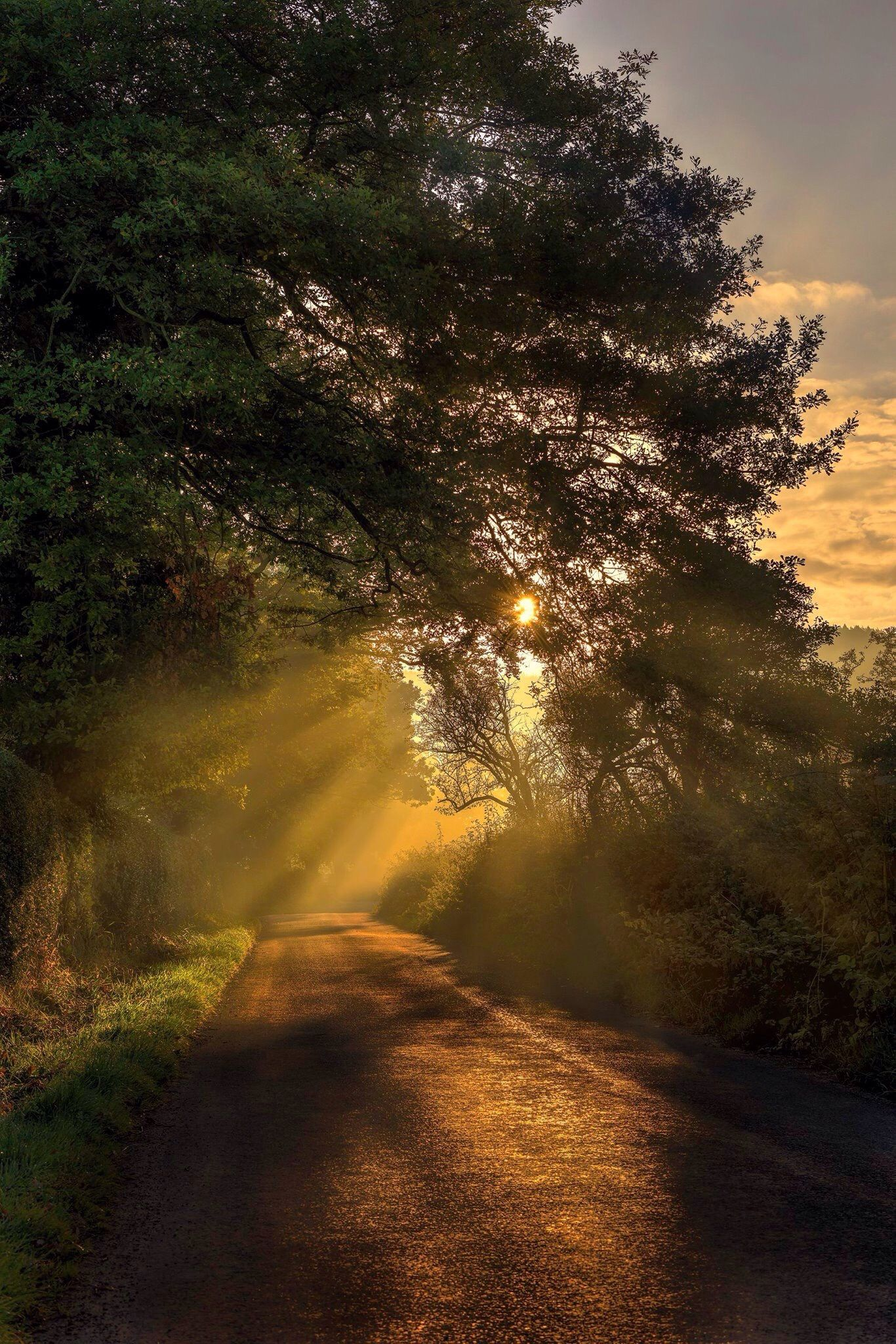 Take a walk into natures spotlight | a misty dawn on an autumn road ...