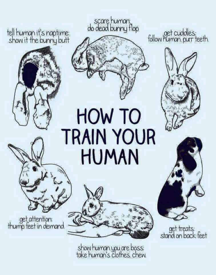 How To Train Your Human Bunny Edition Bunny Mom Cute Baby