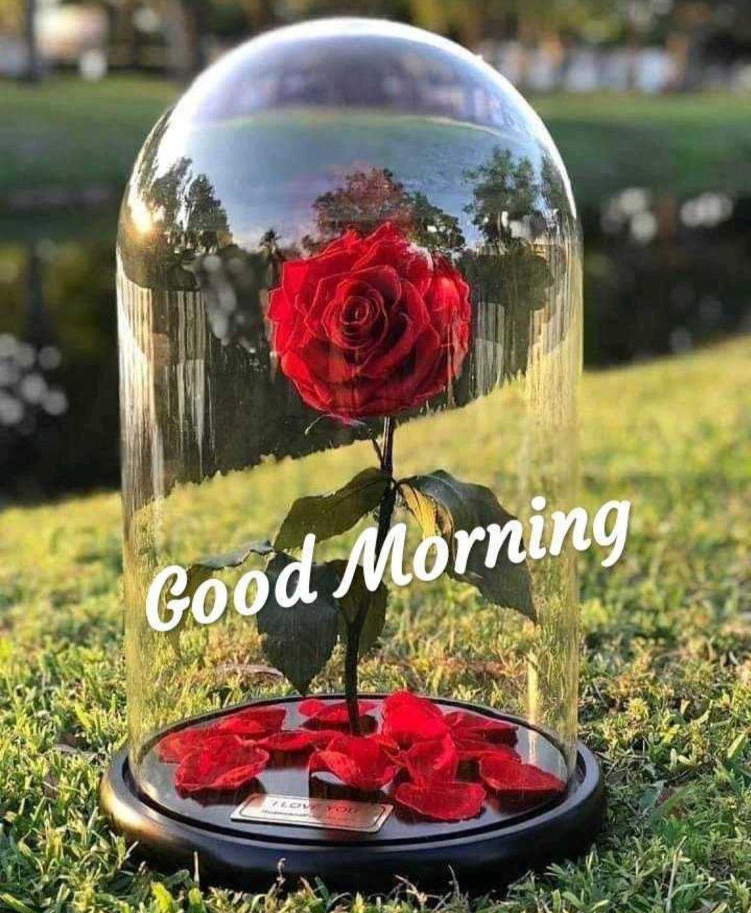 Pin By Aditi Kumari On Good Morning Good Morning Flowers Flower Magic Morning Greeting