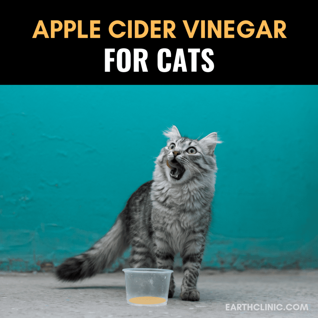 Apple Cider Vinegar for Cats Apple cider vinegar, Cats