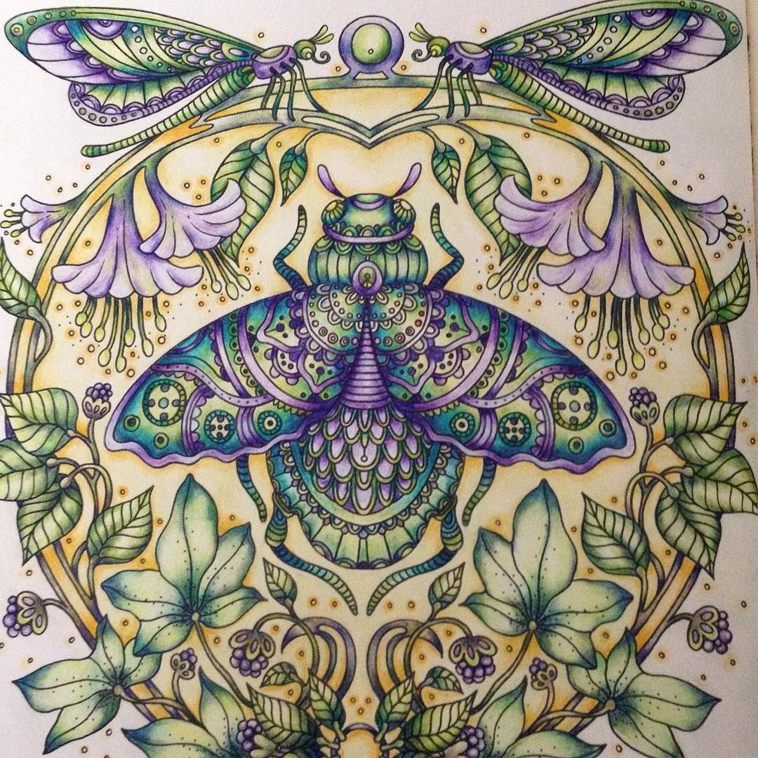 Pin On Schmetterlinge