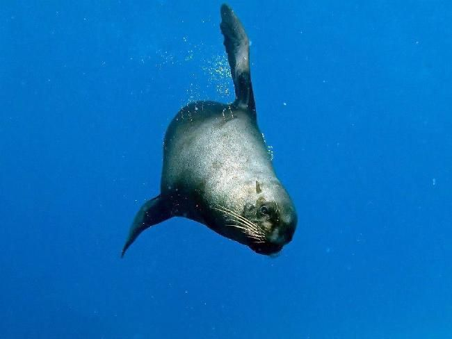 Underwater Manly, by Nick Dawkins: Stunning pictures of life 500m from shore | DailyTelegraph