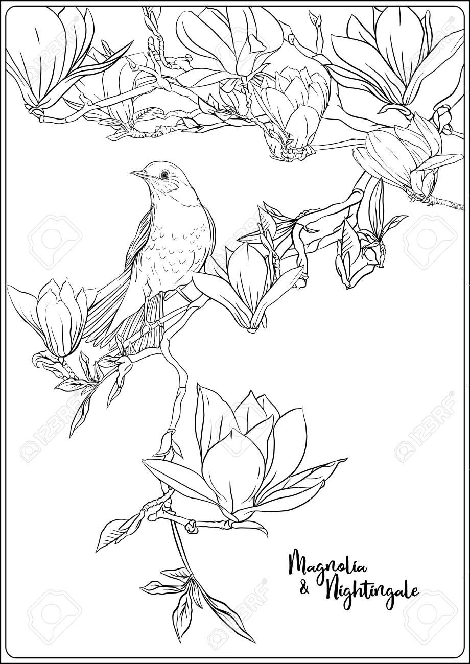 Magnolia Tree Branch With Flowers And Nightingale Coloring Page