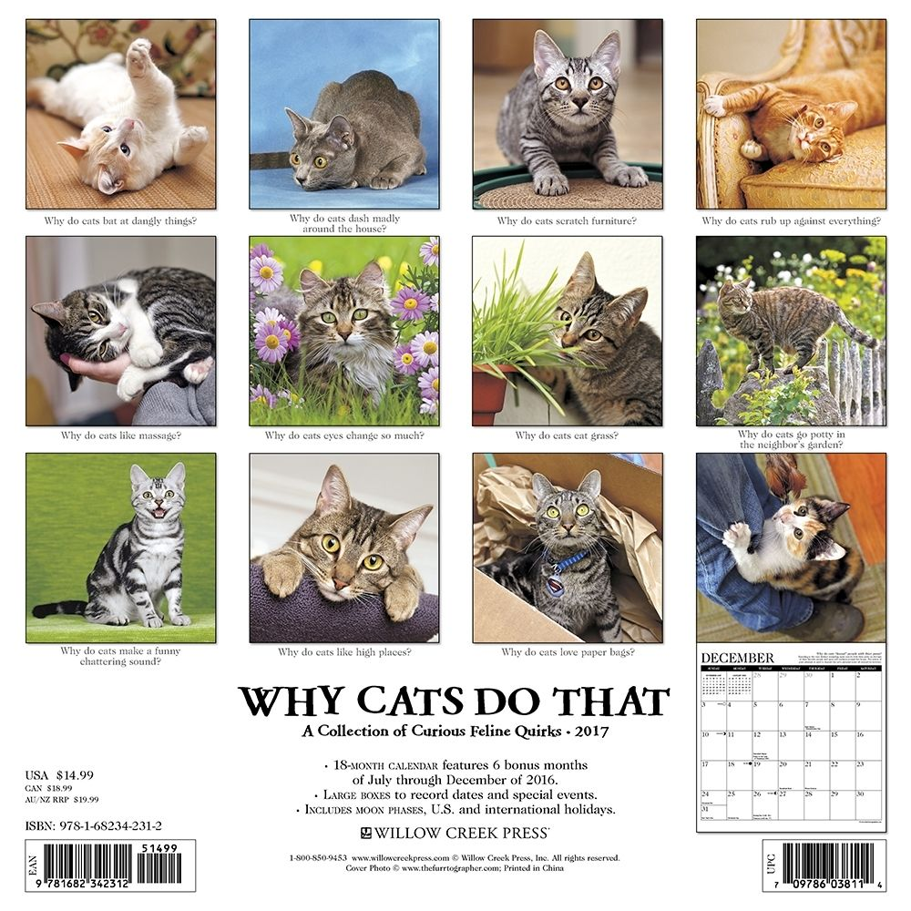 Why Cats Do That Wall Calendar Cat Calendar Kitten Pictures Cats