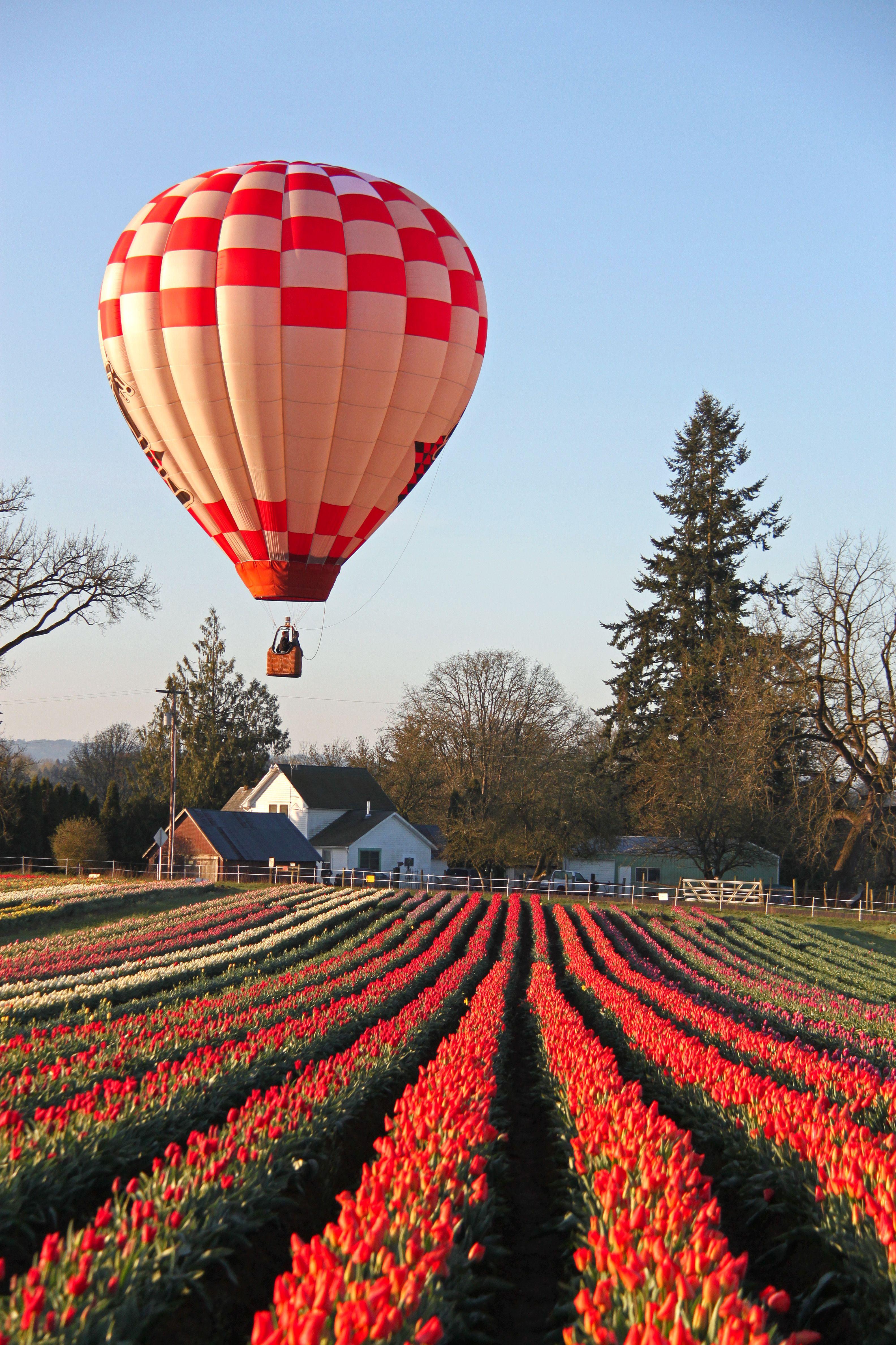 Wooden Shoe Tulip Festival Woodburn Or Woodenshoe Com Hot Air Balloon Air Balloon Air Ballon