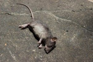 New bubonic plague case confirmed in Michigan - 14th case ...
