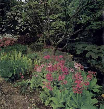traditional shade garden ideas - Shade Garden Design Ideas