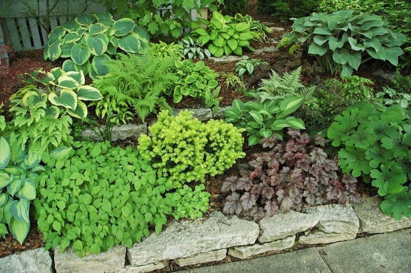 Landscaping Ideas  Pictures Of Shaded Front Yard Google Search - Urban front yard landscaping ideas