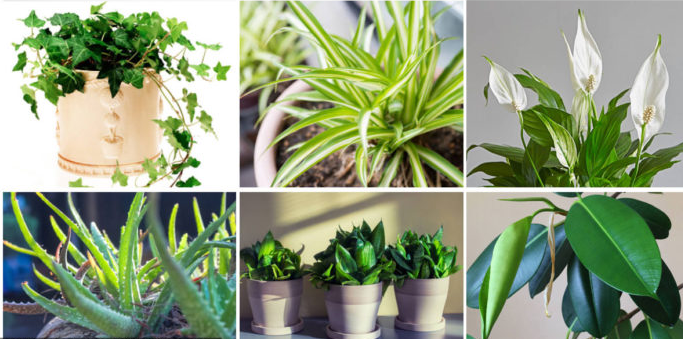 We All Know That Our Largest Oxygen Producers Are Plants Some Of Them Release More Some Less Oxygen However They Plants Air Purifying House Plants Clean Air