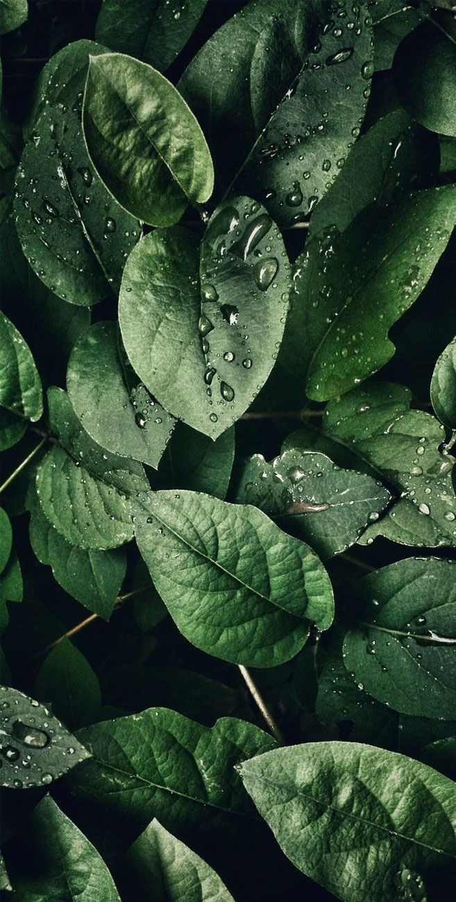 Drops On Leafs Backgrounds Phone Wallpapers Green Wallpaper