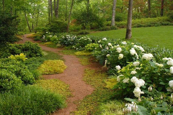 Line a shade garden walkway with hydrangea for a bloom filled path - paisaje jardin