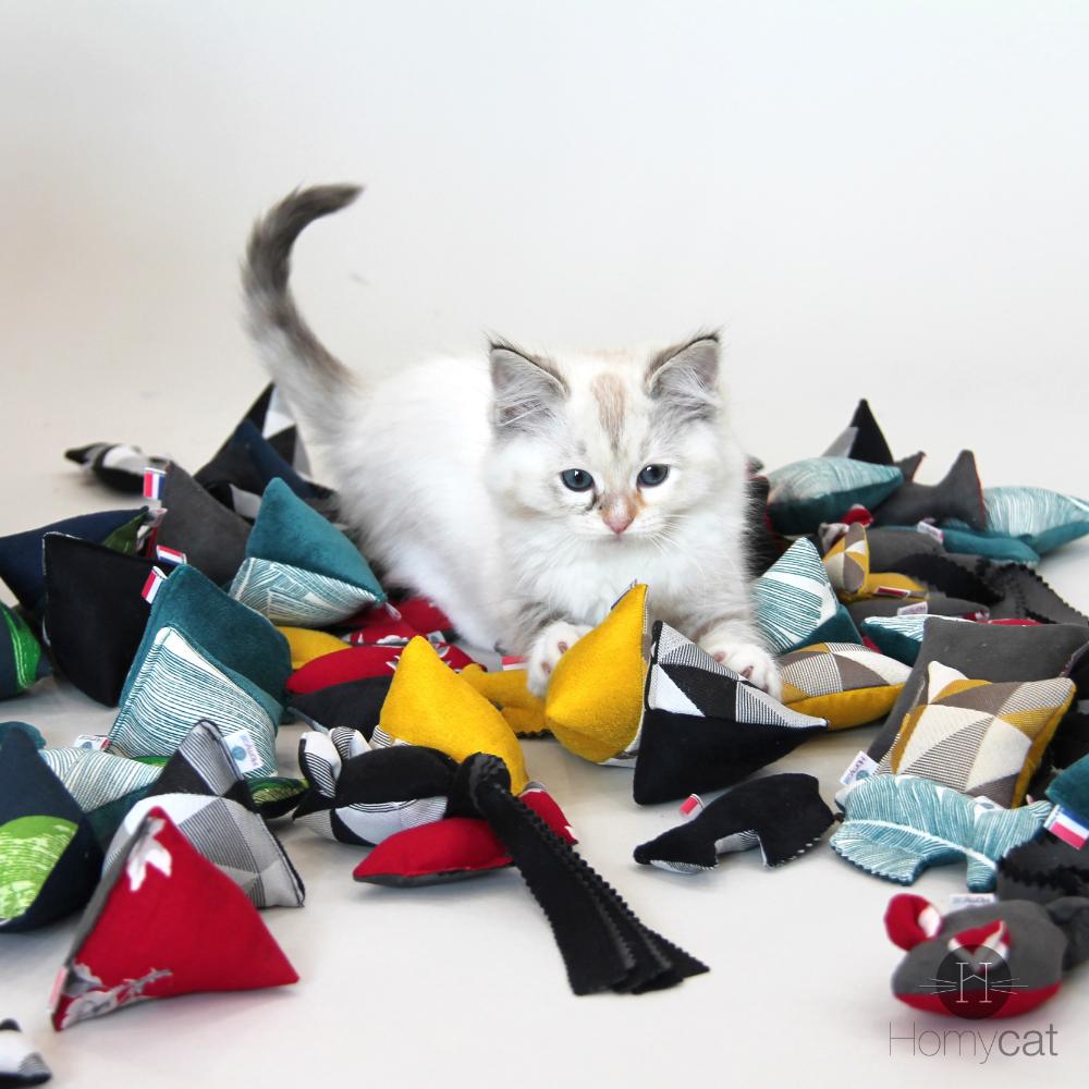 Ce qu'il faut savoir pour avoir un chat en appartement | Jouet pour chat, Chaton a adopter, Chat