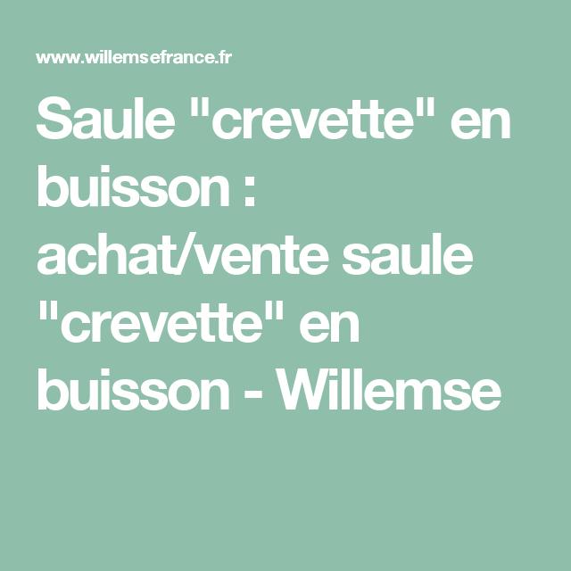 Www Willemsefrance Fr saule 'crevette' en buisson | horticulture | pinterest | horticulture