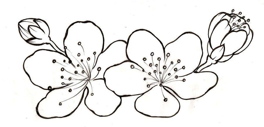 яблоневый цвет картинка раскраска элементы изображения