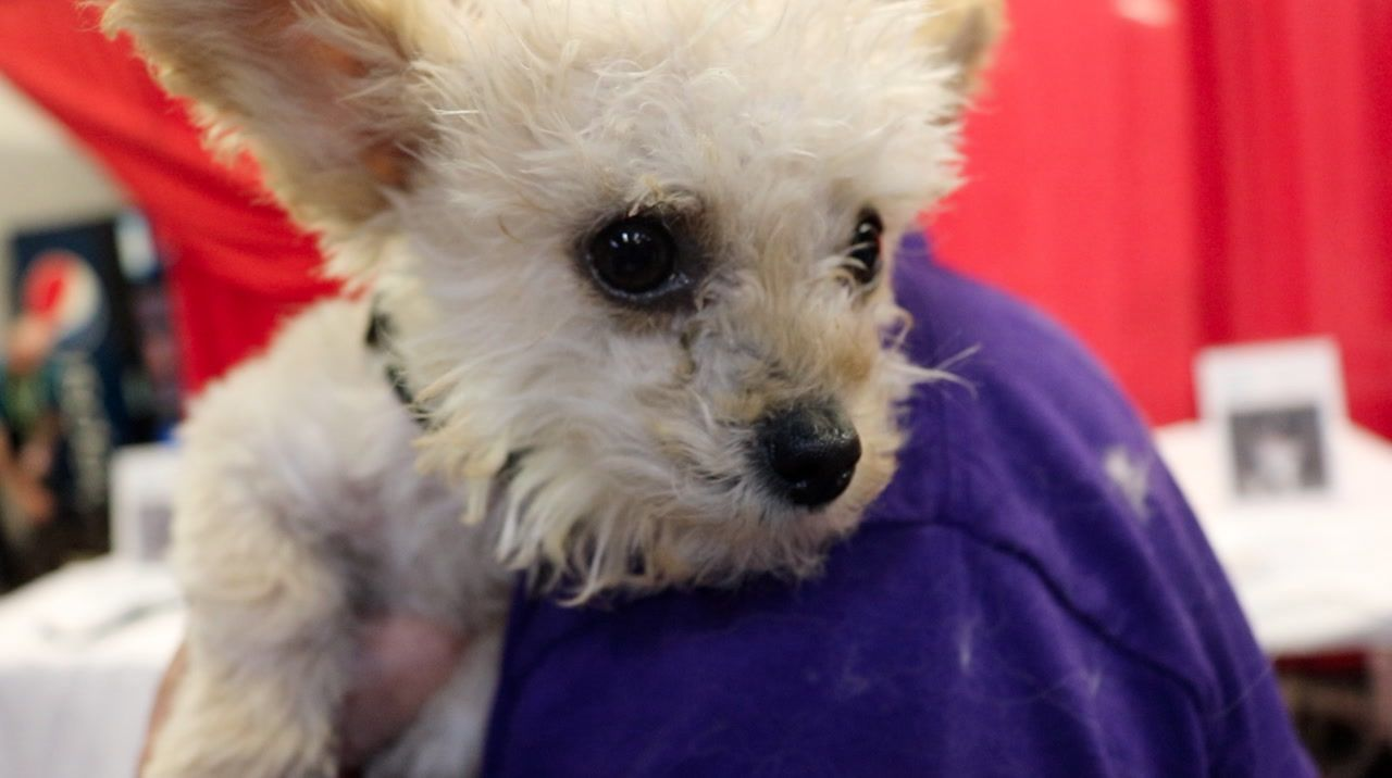 52 dogs go to forever homes after Best in Show event