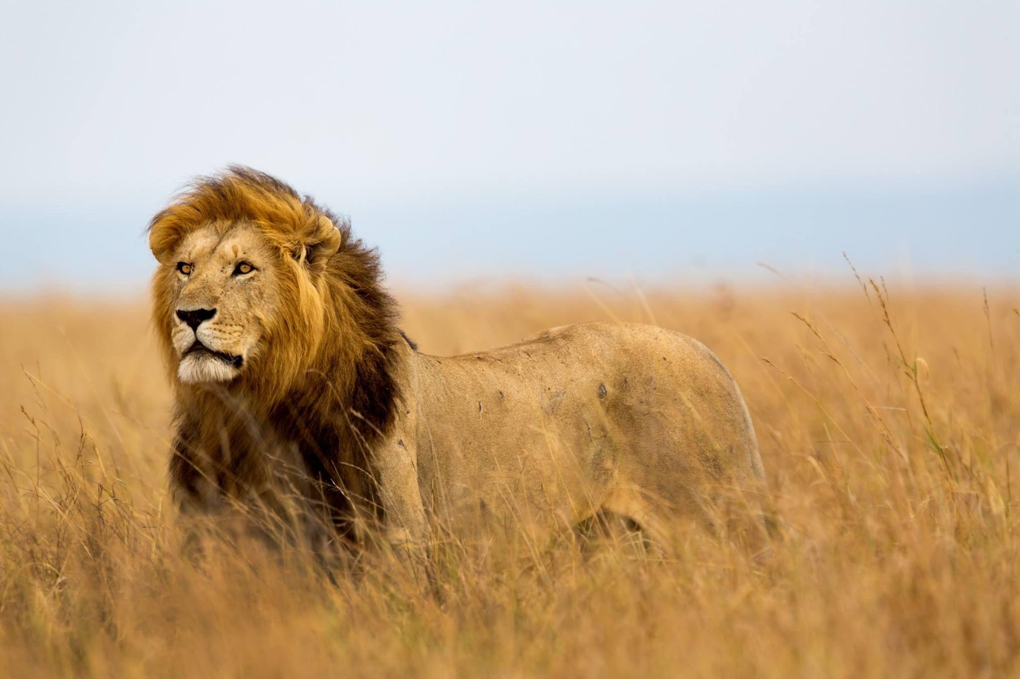 Masai Mara Luxury Safaris Your spirit animal, Deadly