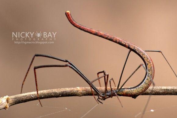 生き物 おしゃれまとめの人気アイデア Pinterest Mujina Insects Insect Photography Spider