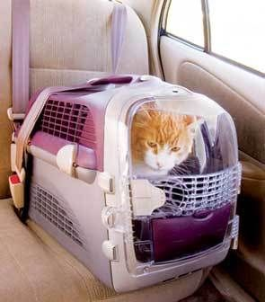 Pet Cargo Cabrio Airline Approved Rsp 36 99 Our Price 32 99
