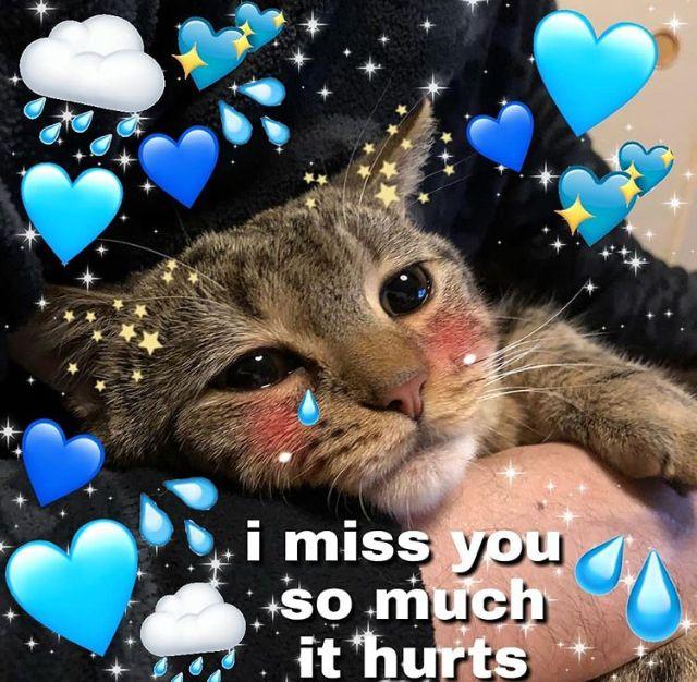 Eu Sinto Muito Sua Falta Todo Dia Quando A Gente Briga Quando Voce Some Quando Voce Vai Jogar Ou Assistir Quando E Cute Cat Memes Love Memes Cute Love Memes