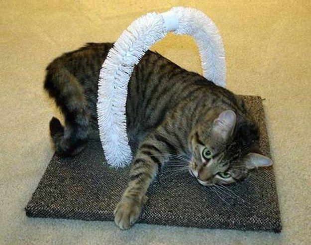Lad dine katte ridse sig denne DIY selv-petting station lavet med toilet bowl børster.