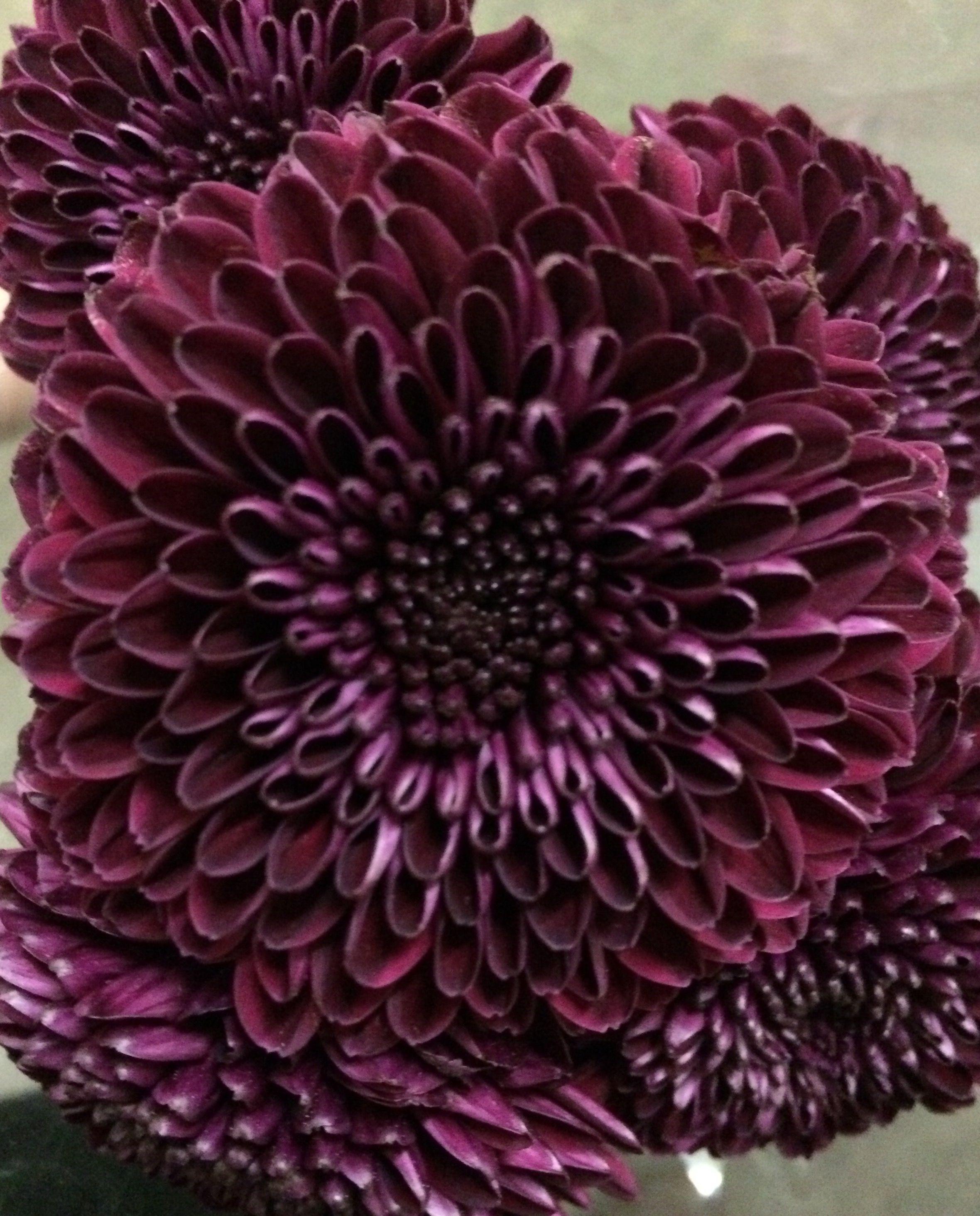 purples flowers