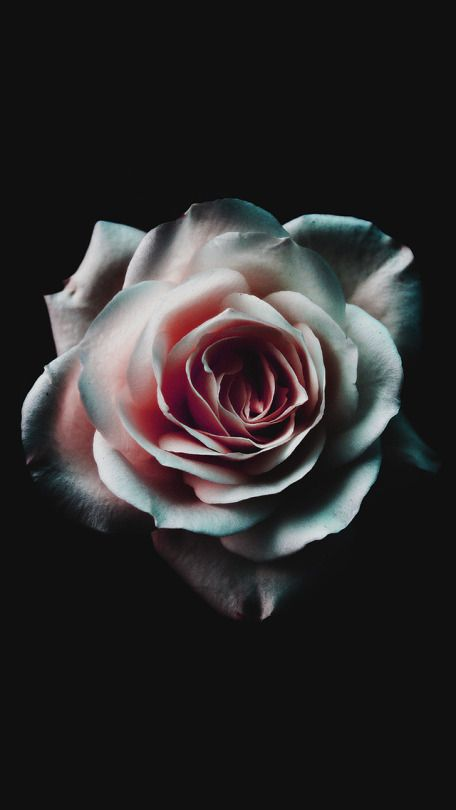 freeiOS8 Black phone wallpaper, Rose wallpaper, 4k