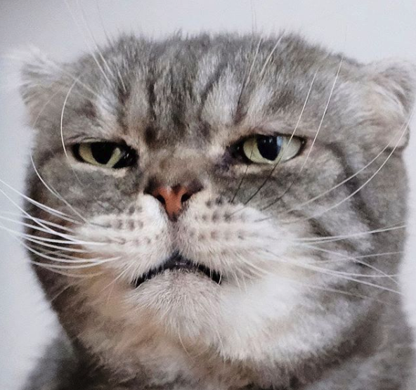 Monday Facehttps I Redd It Z73y2uishh331 Png Cat Diseases Cute Cats And Dogs Cats