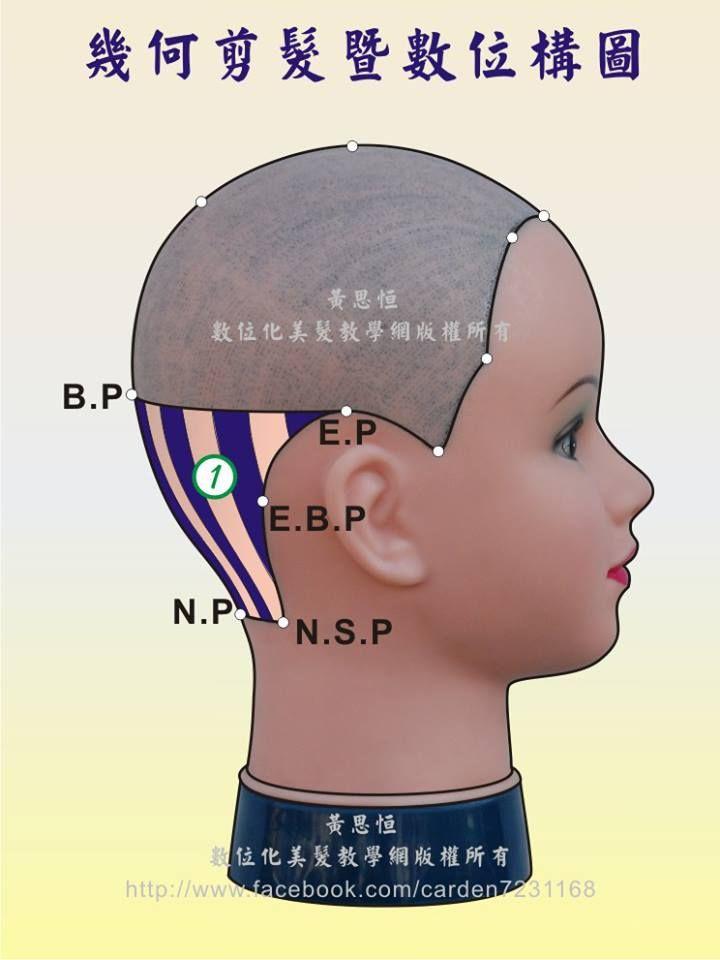黃思恒幾何剪髮數位構圖--髮片劃分系列,縱劃分髮片(Vertical part)在第一設計區的構圖-左側呈現