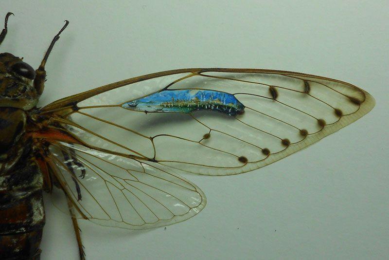 Mariposa pela metade