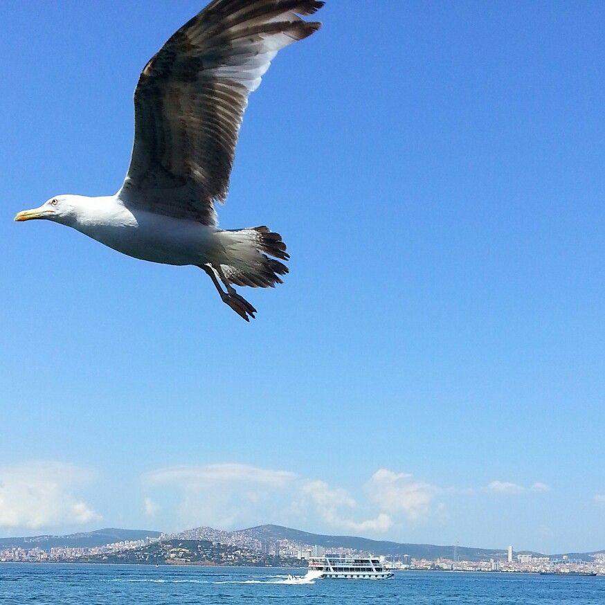 #istanbul www.gezicigunluk.com