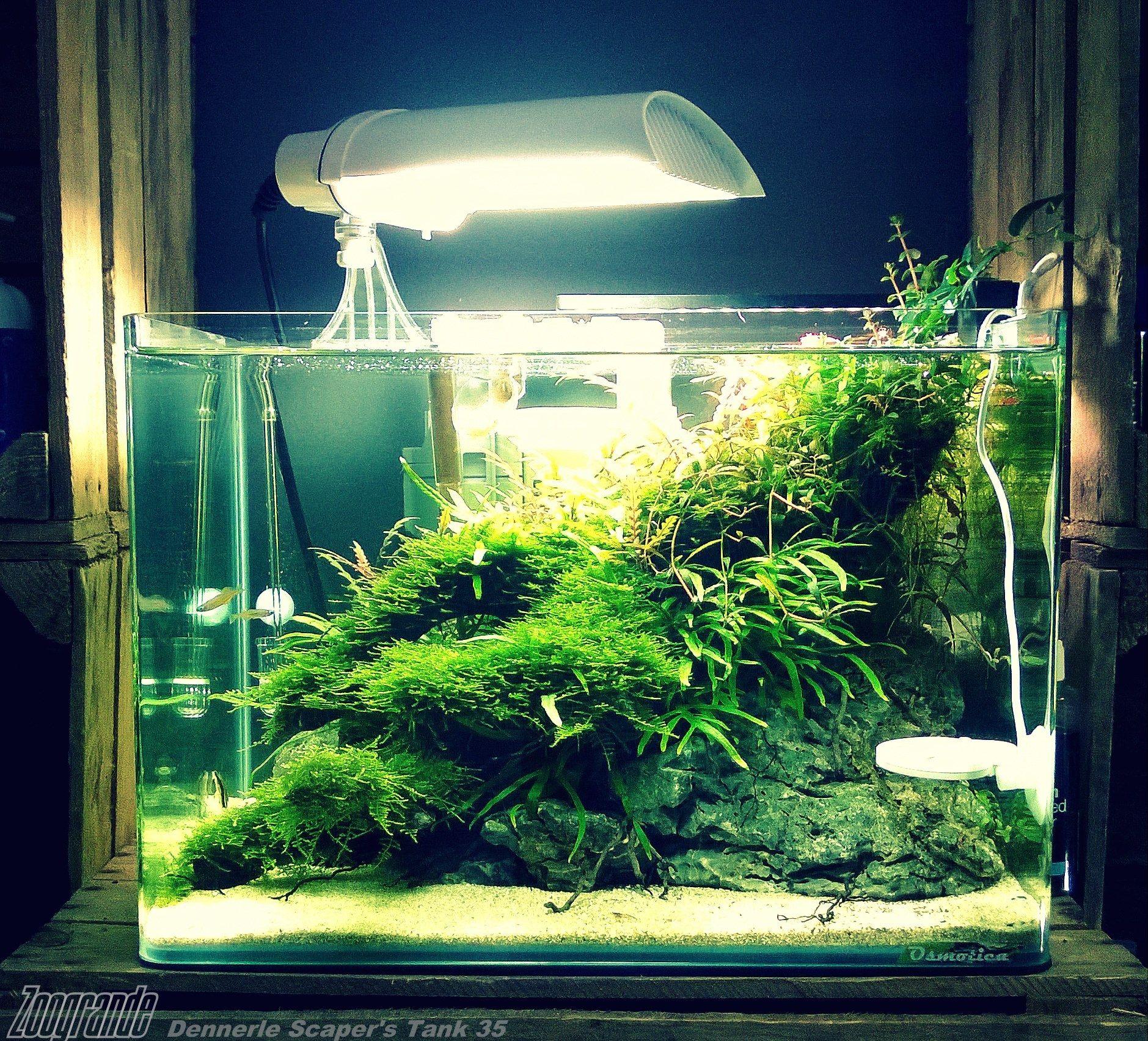 820d4709799e28728fa6c7770586f550 Luxe De Crevette Aquarium Des Idées