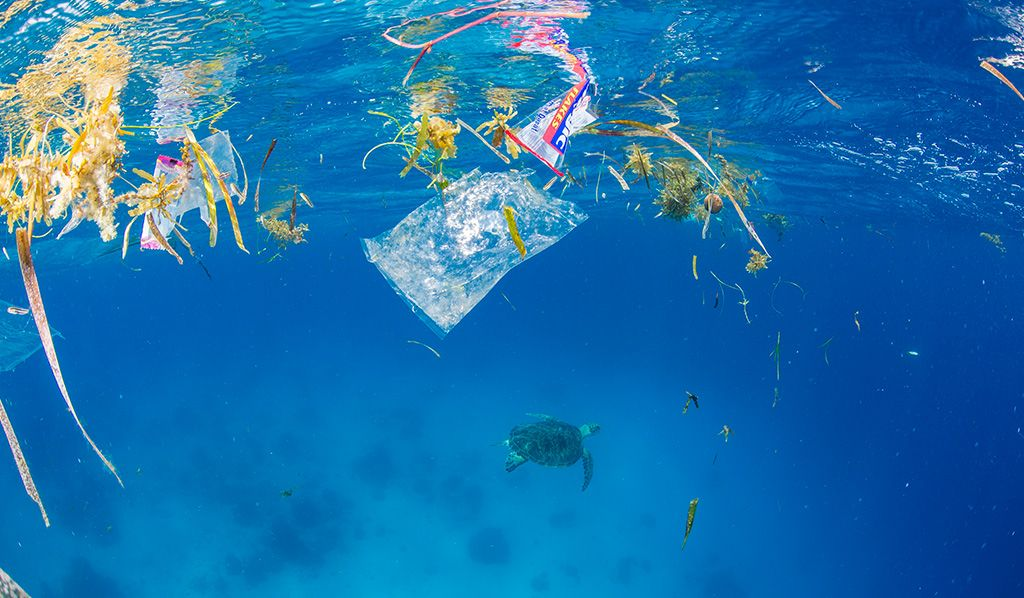 Conférence à BiodiversiTerre préserver les océans de la