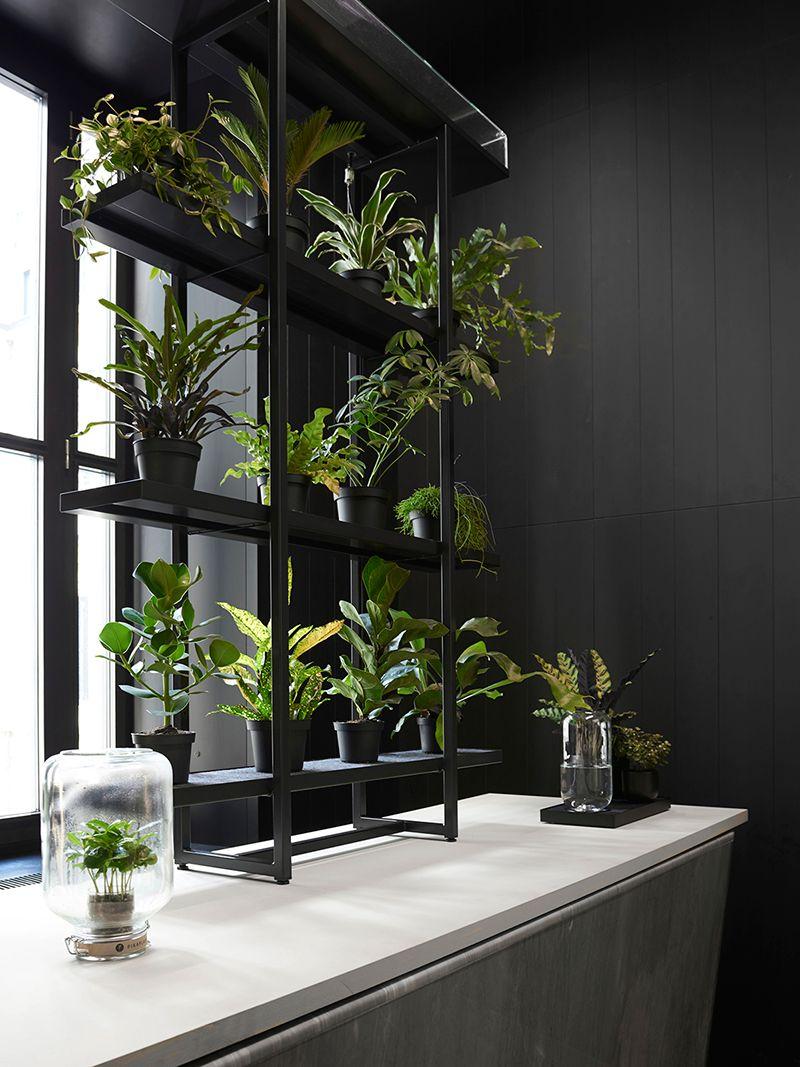Etagere Pour Plantes Interieures pikaplant jar - caféier arabica serre/terrarium plante