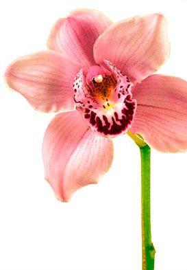 Orchid Flower Meaning Symbolism Teleflora Com Flower Meanings Orchid Flower Orchids